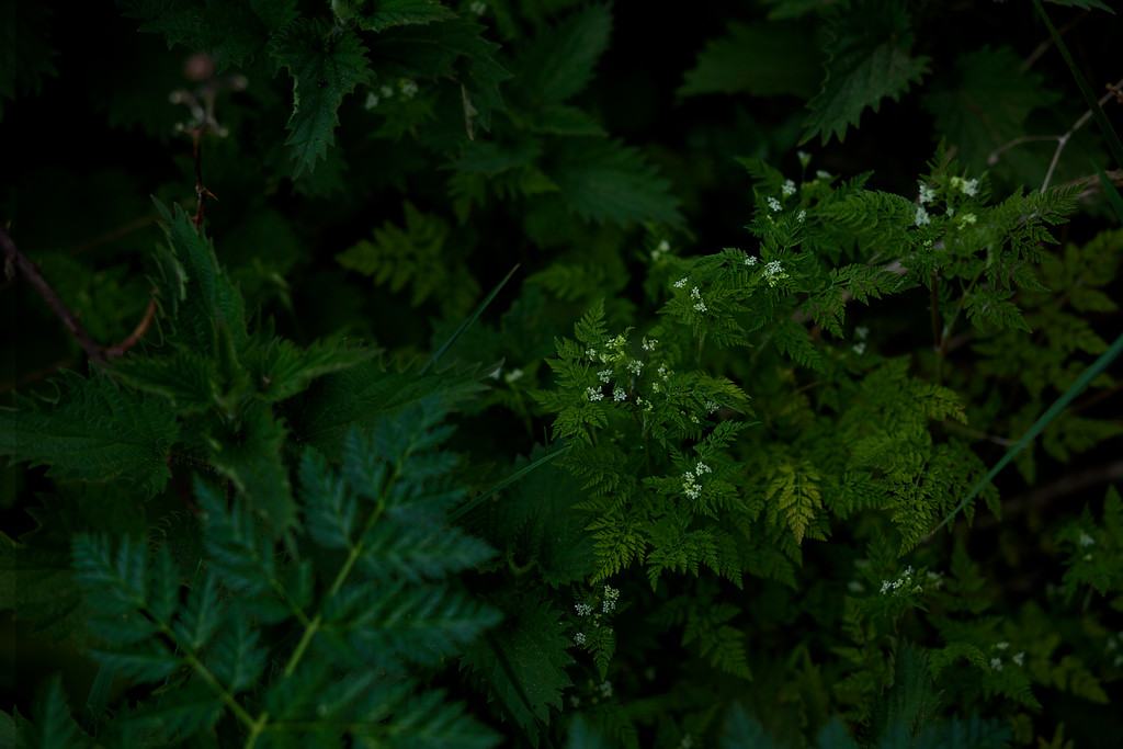 Nature_Forager_photographer0026