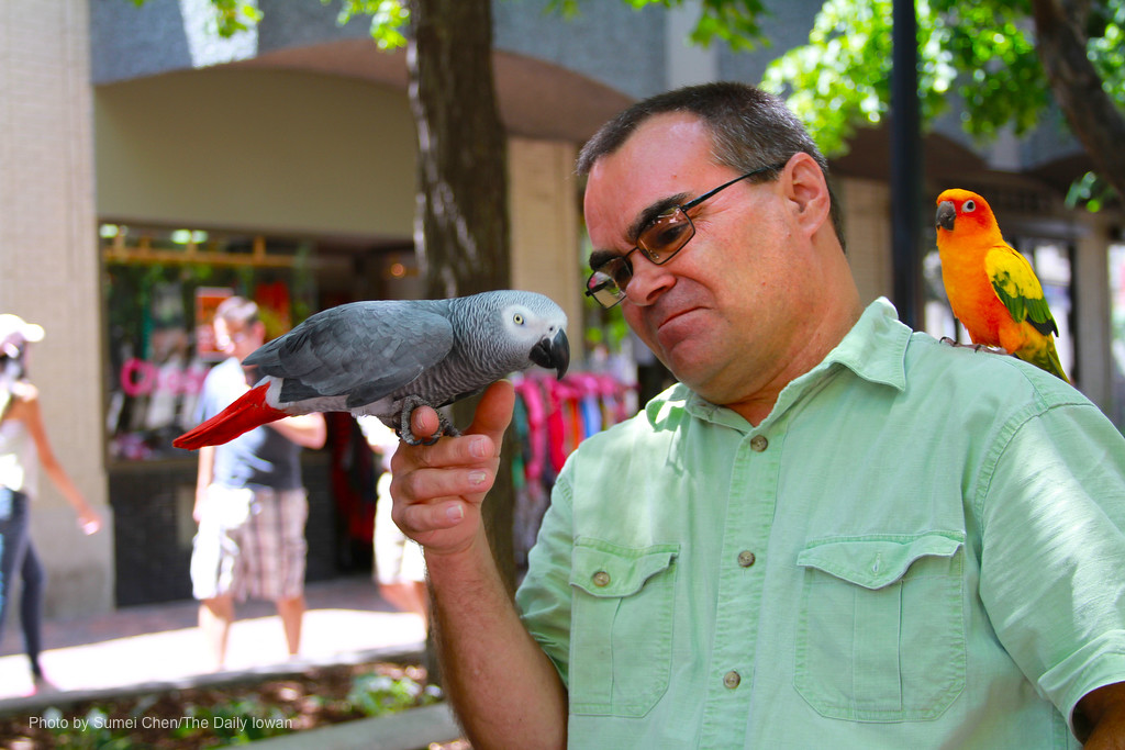 Iowa City, IA - Gary Leonard spends time with his parrots, Jack (left) and Bob, on Pedestrian Mall on Sunday, June 17, 2012. (The Daily Iowan/Sumei Chen)