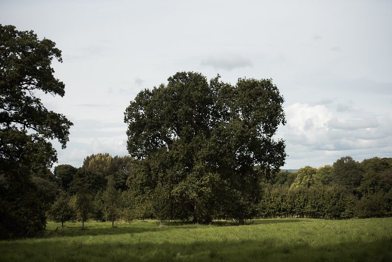 Manor_House_Trees_029
