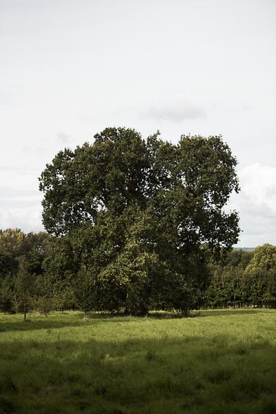 Manor_House_Trees_030