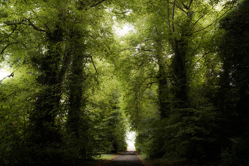 Manor_House_Trees_014