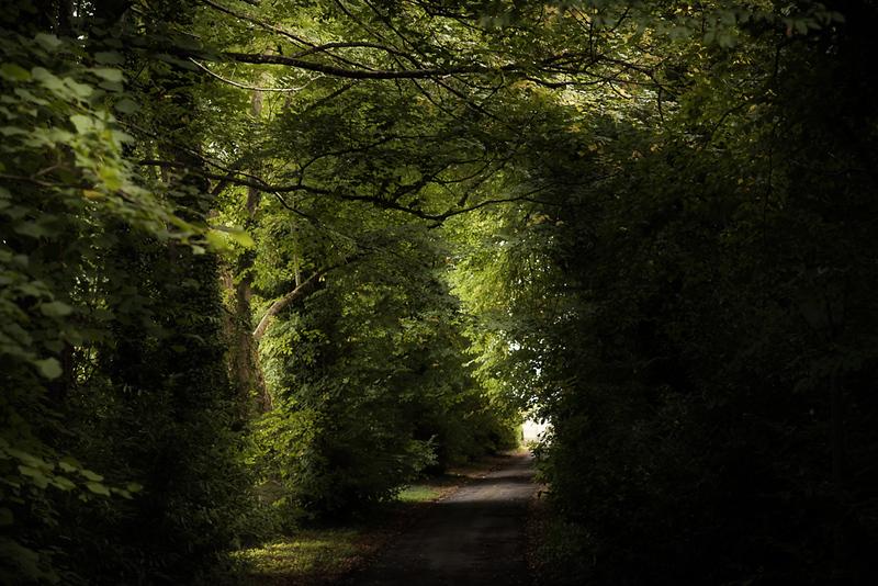 Manor_House_Trees_010