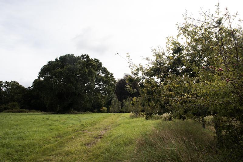 Manor_House_Trees_041