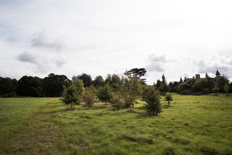Manor_House_Trees_046