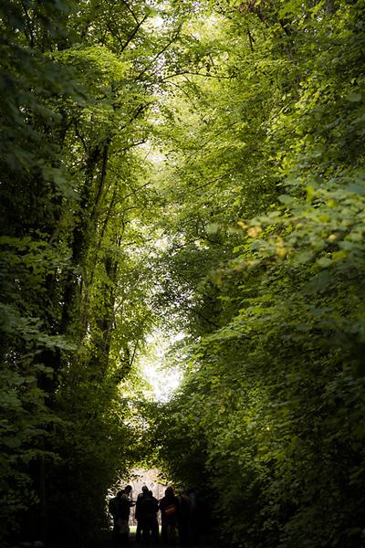 Manor_House_Trees_008