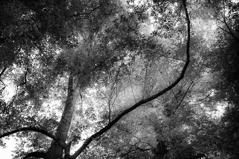 Manor_House_Trees_012