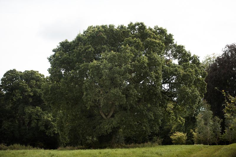 Manor_House_Trees_042