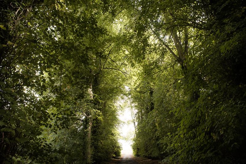 Manor_House_Trees_020