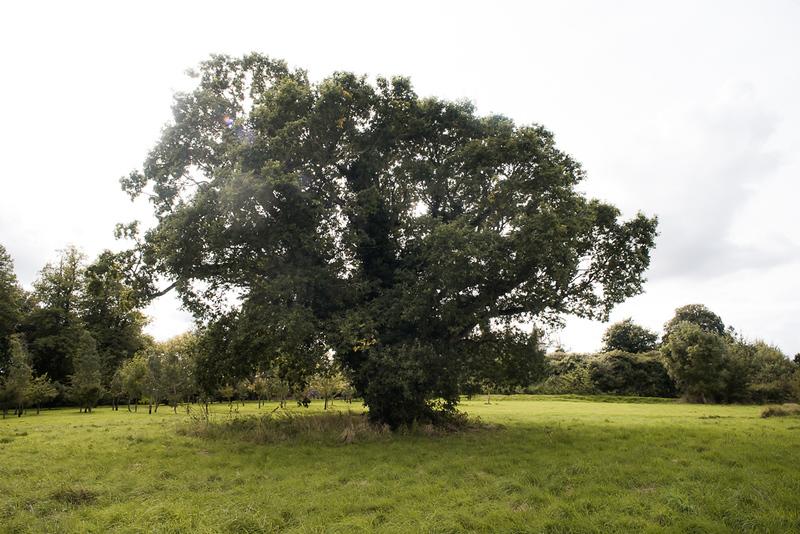 Manor_House_Trees_038