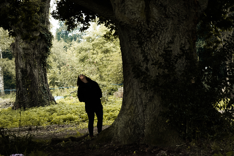 Poltimore_House_Great_Trees_031