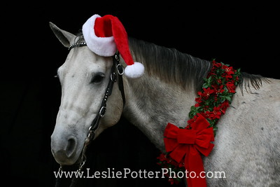 Gray Quarter Horse with Christmas Decorations