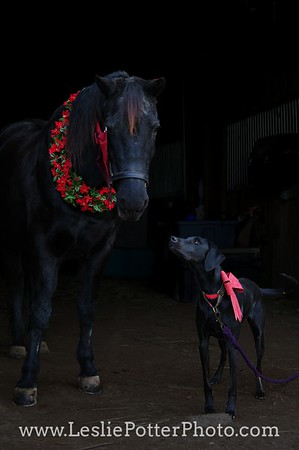 Horse and Dog with Christmas Decorations
