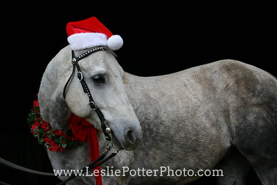 Gray Quarter Horse with Santa Hat