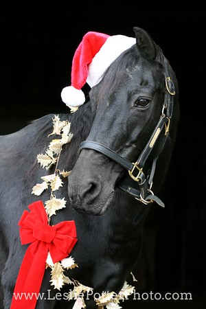 Black Morgan Horse with Christmas Decorations and Santa Hat