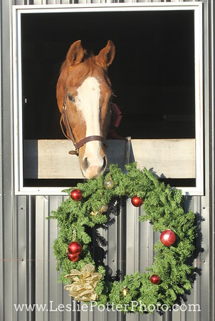 Chestnut Horse with Christmas Decorations