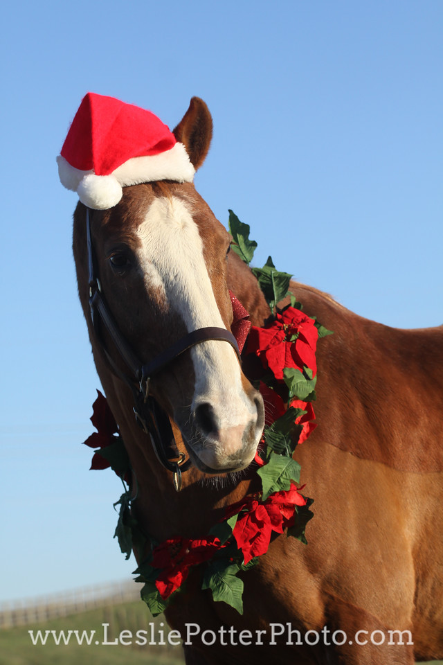 Chestnut Horse with Santa Hat