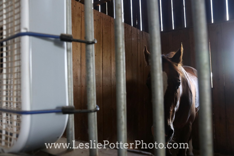 Horse in Stall with Box Fan