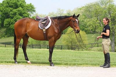 English Horse and Rider