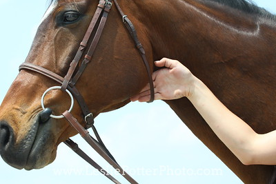 Fitting an English Bridle