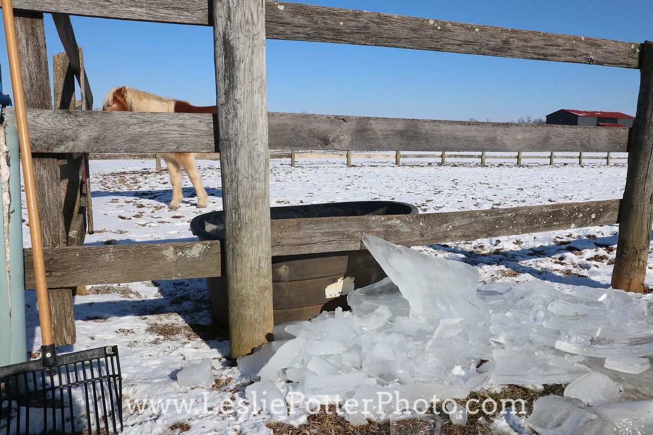 Breaking Ice out of a Horse's Water Trough