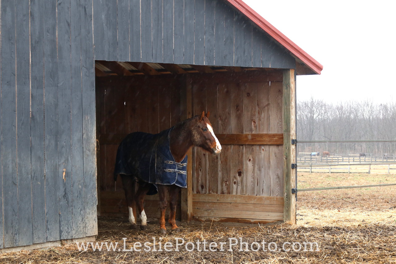 Horse in a Shelter on a Rainy Day