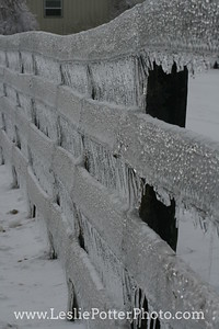 Horse Fencing Encased in Ice