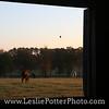 Spider in a barn window