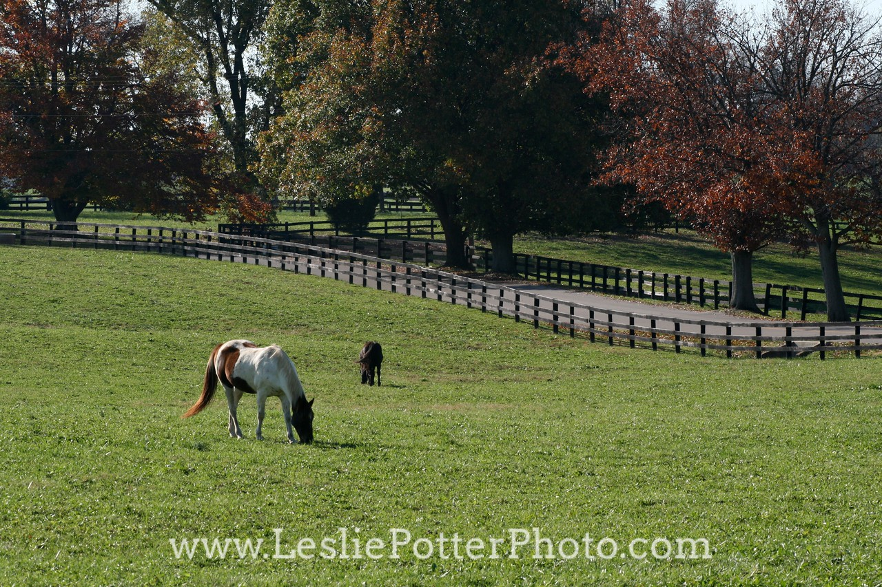Horse Grazing in Autumn