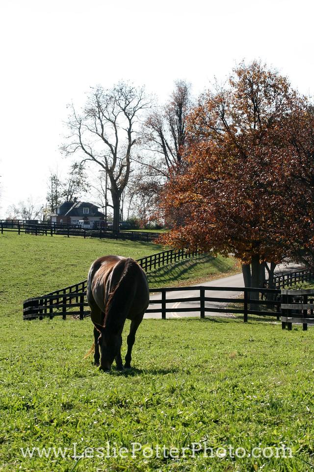 Horse Grazing in Pasture in Autumn