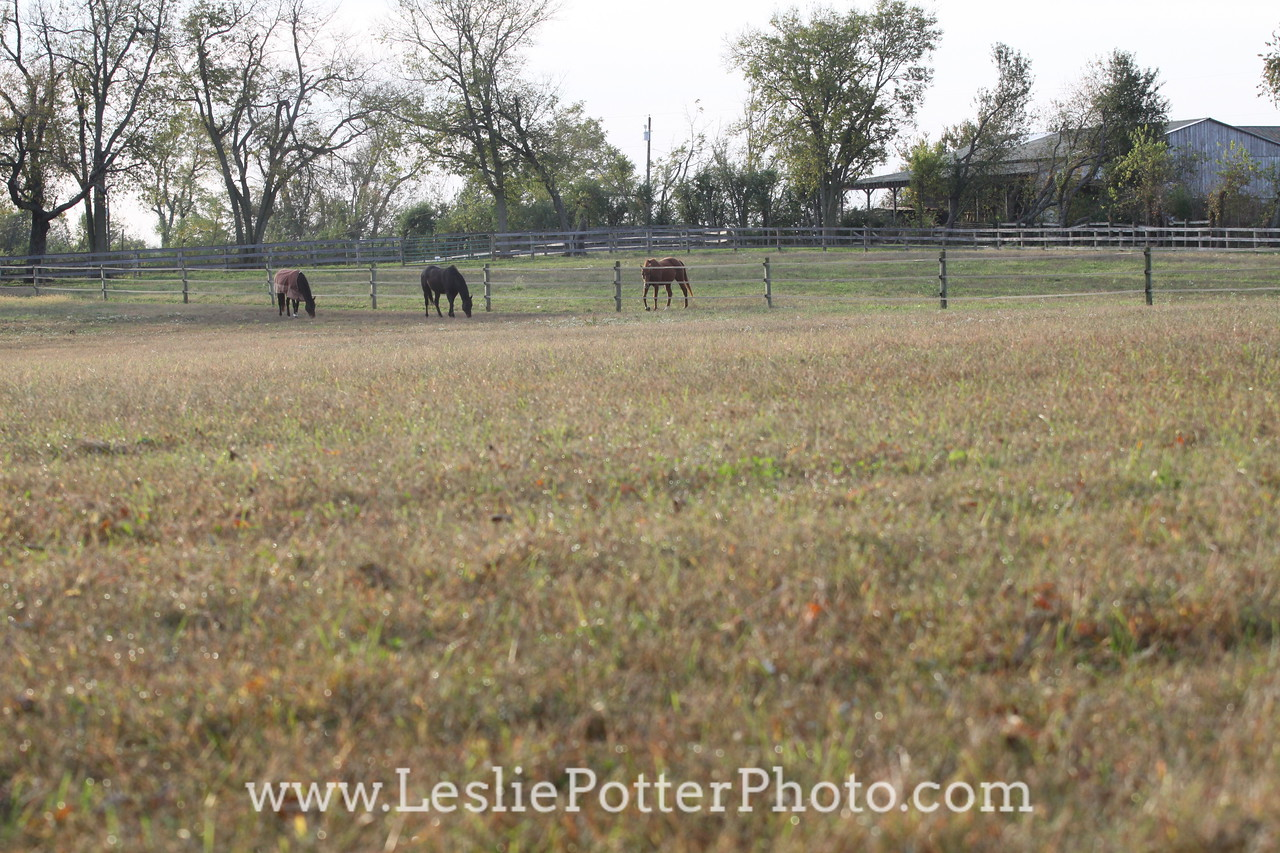 Horses Behind Electric Tape Fence