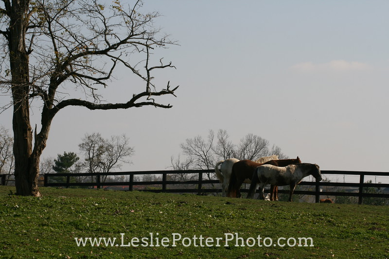 Horses Standing at the Fence