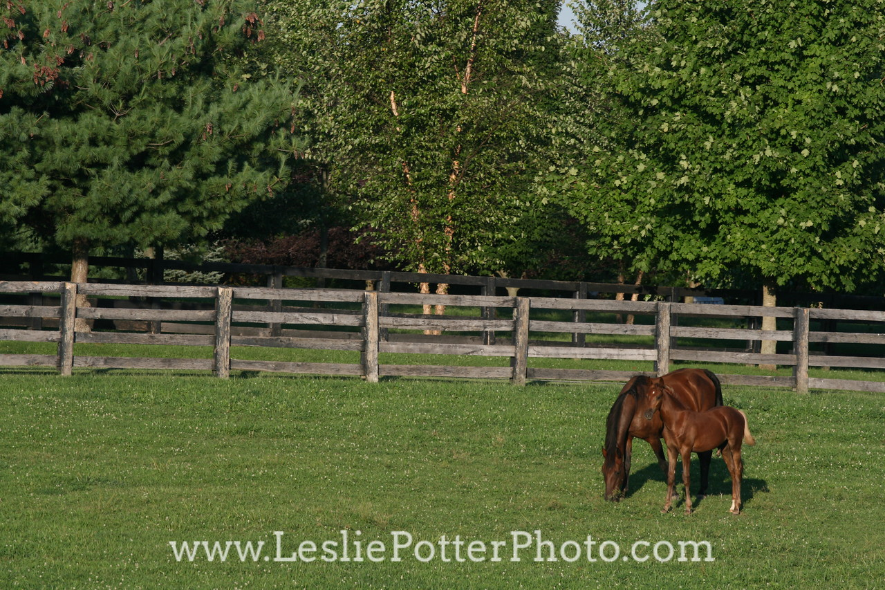 Saddlebred Mare and Foal in Pasture