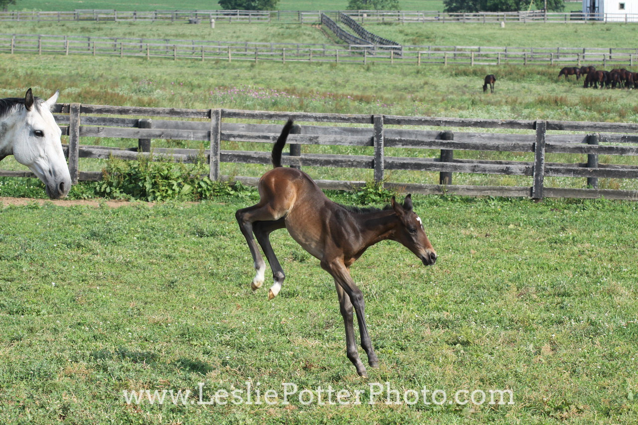 Foal Bucking and Kicking