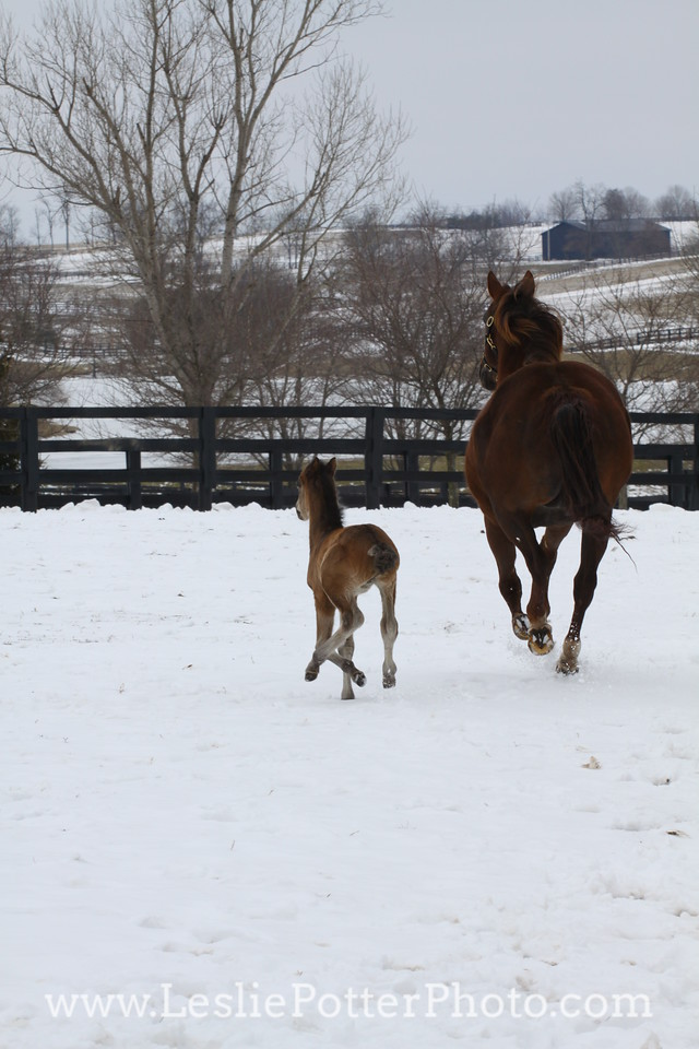 Mare and Foal in the Snow