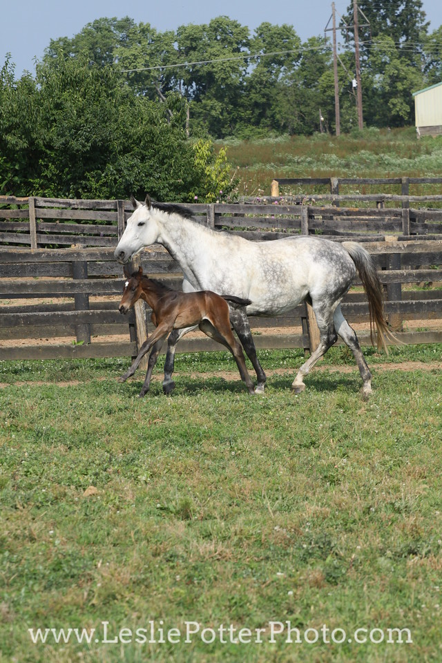 Mare and Foal Running