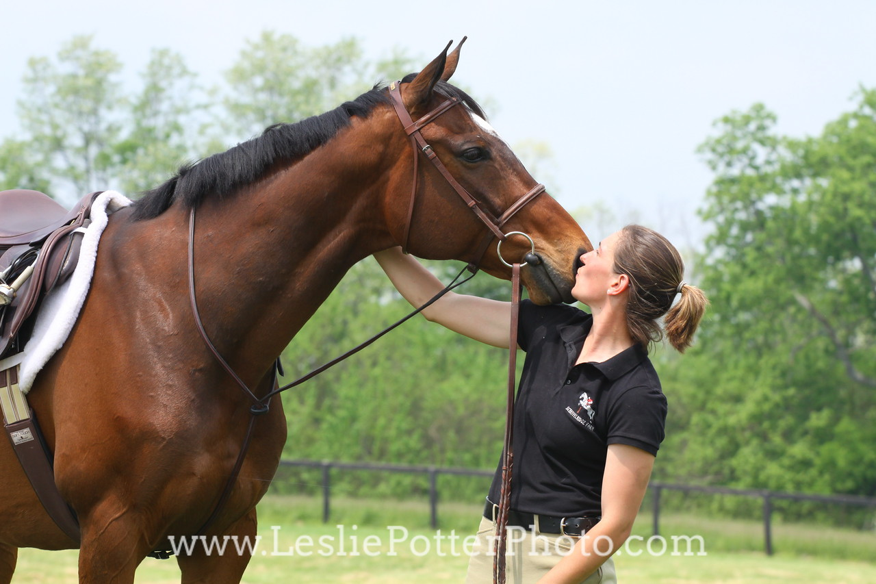 Bay Sport Horse with Owner