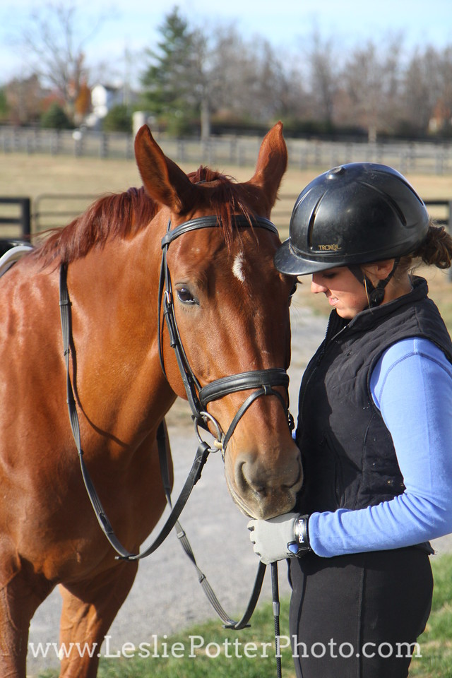 Chestnut Dressage Horse with Rider
