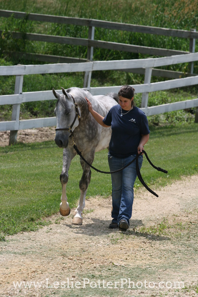 Dapple Gray National Show Horse with Owner