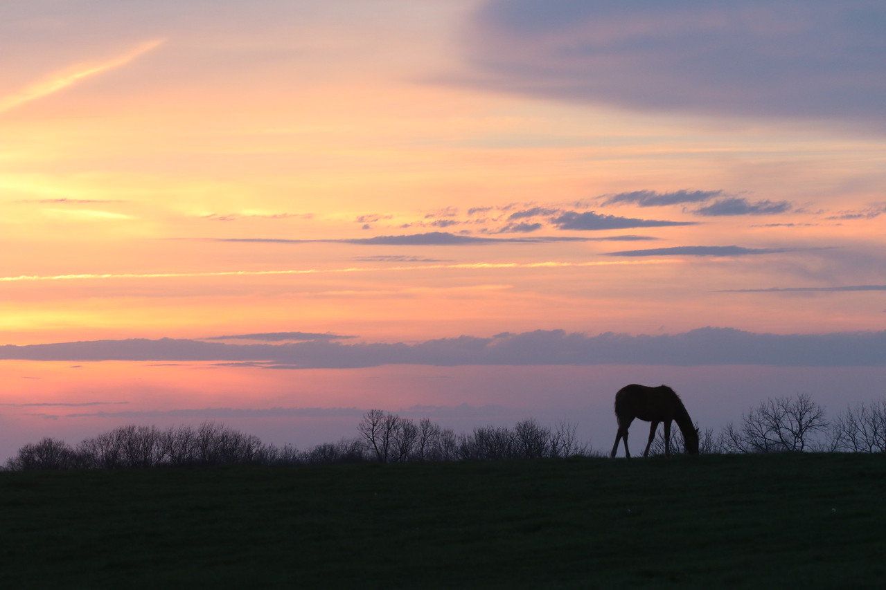 Horse Silhouette at Sunset