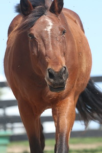 Horse bothered by flies