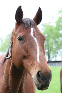 Horse with interesting face marking