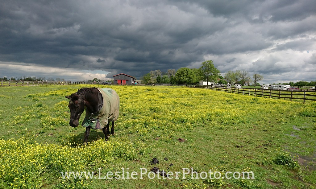 Storm Clouds over a Horse Farm
