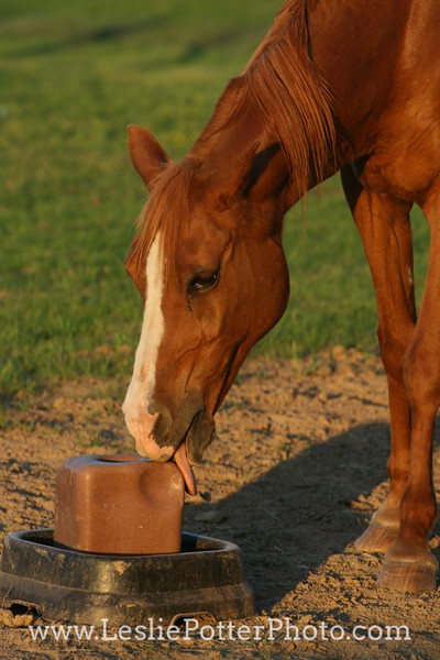 Horse Licking Mineral Block