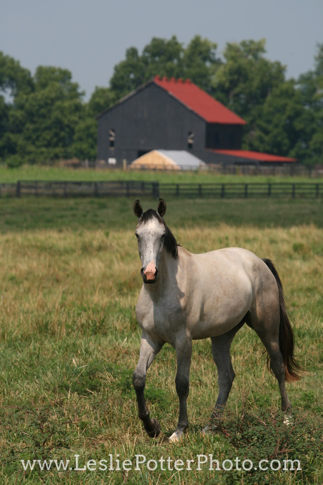 Horse in Pasture in Front of a Barn