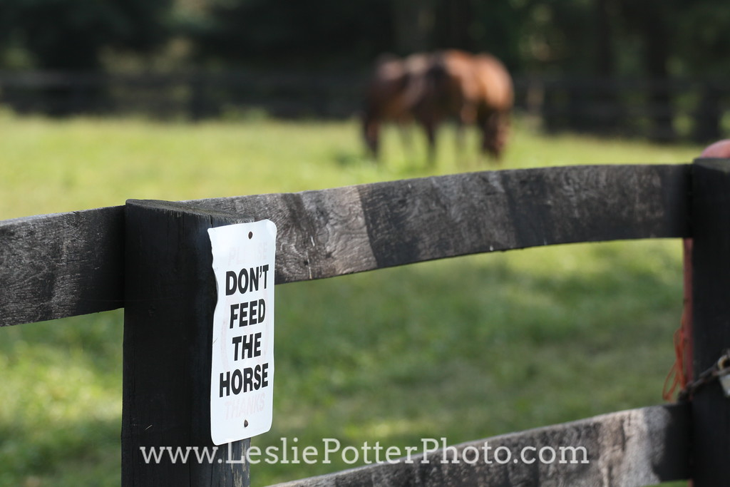 Don't Feed the Horse