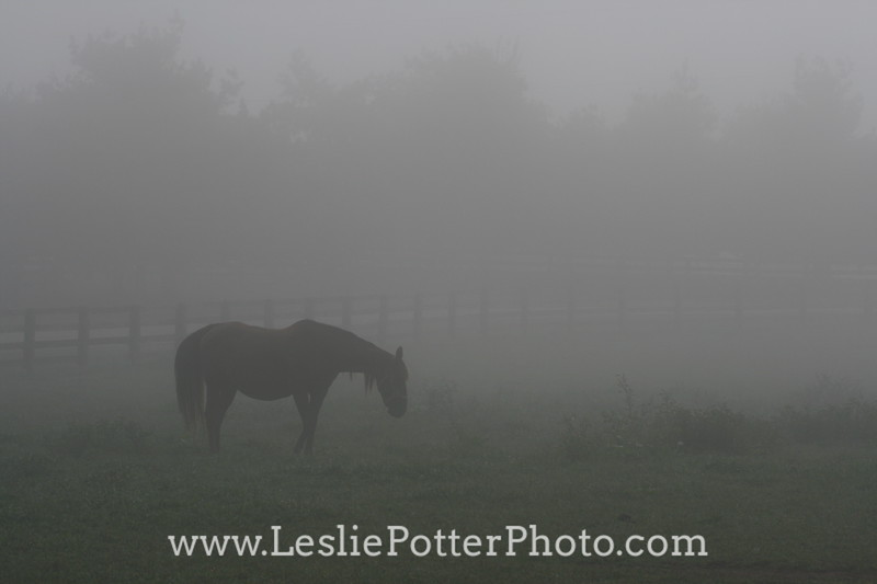 Horse Grazing in Fog