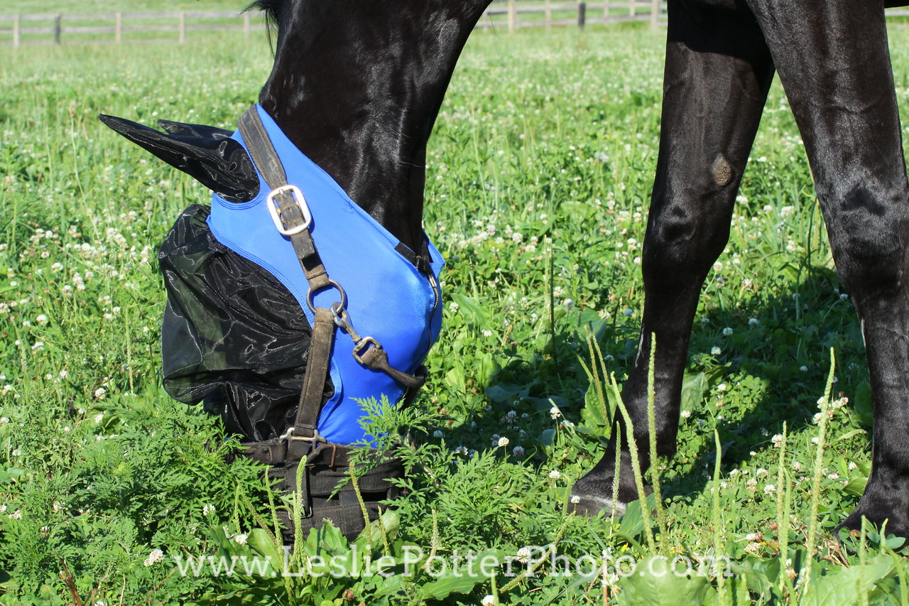 Horse Wearing Fly Mask and Grazing Muzzle