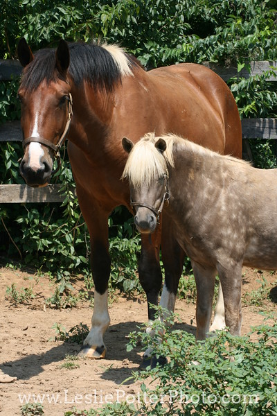 Horse and Pony Standing in a Paddock