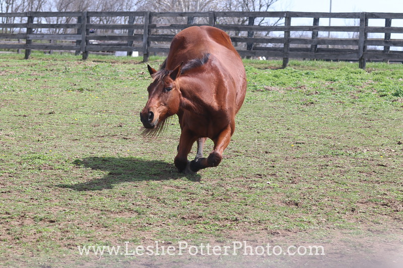 Bay Horse Rolling