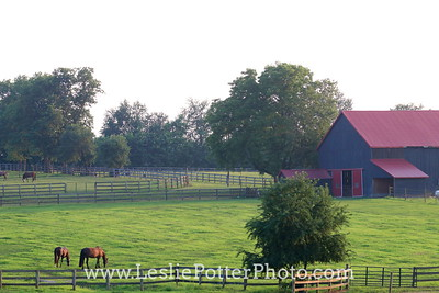 Horse Farm at Dusk